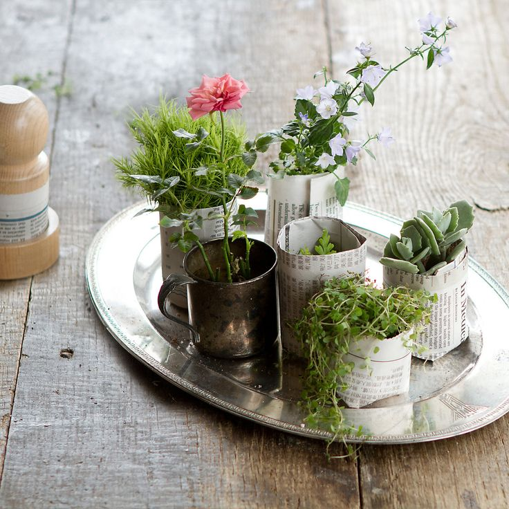 6a6944a65d48d947ed7508f86f57fcbc--flower-plants-potted-plants