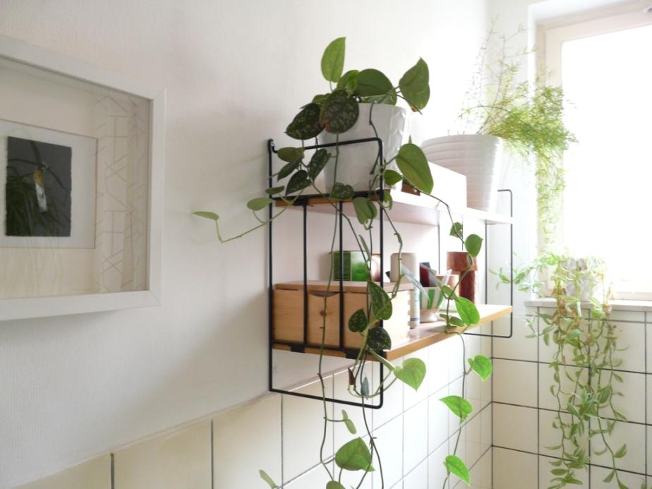bathroom-plants-on-shelves