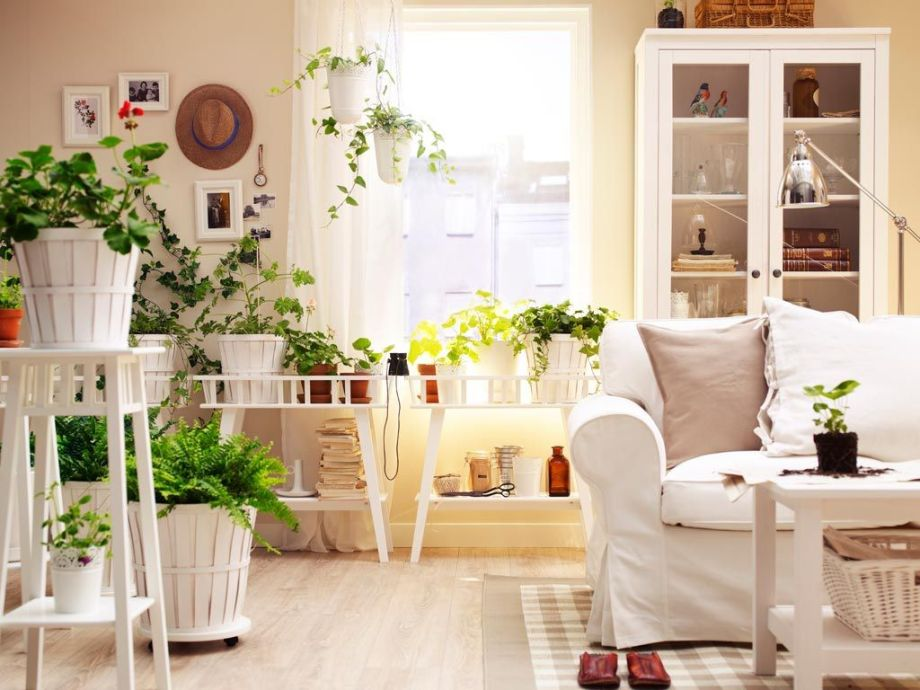 House-indoor-plants-decor-with-wooden-bucket-potted-plants-also-wooden-coffee-table